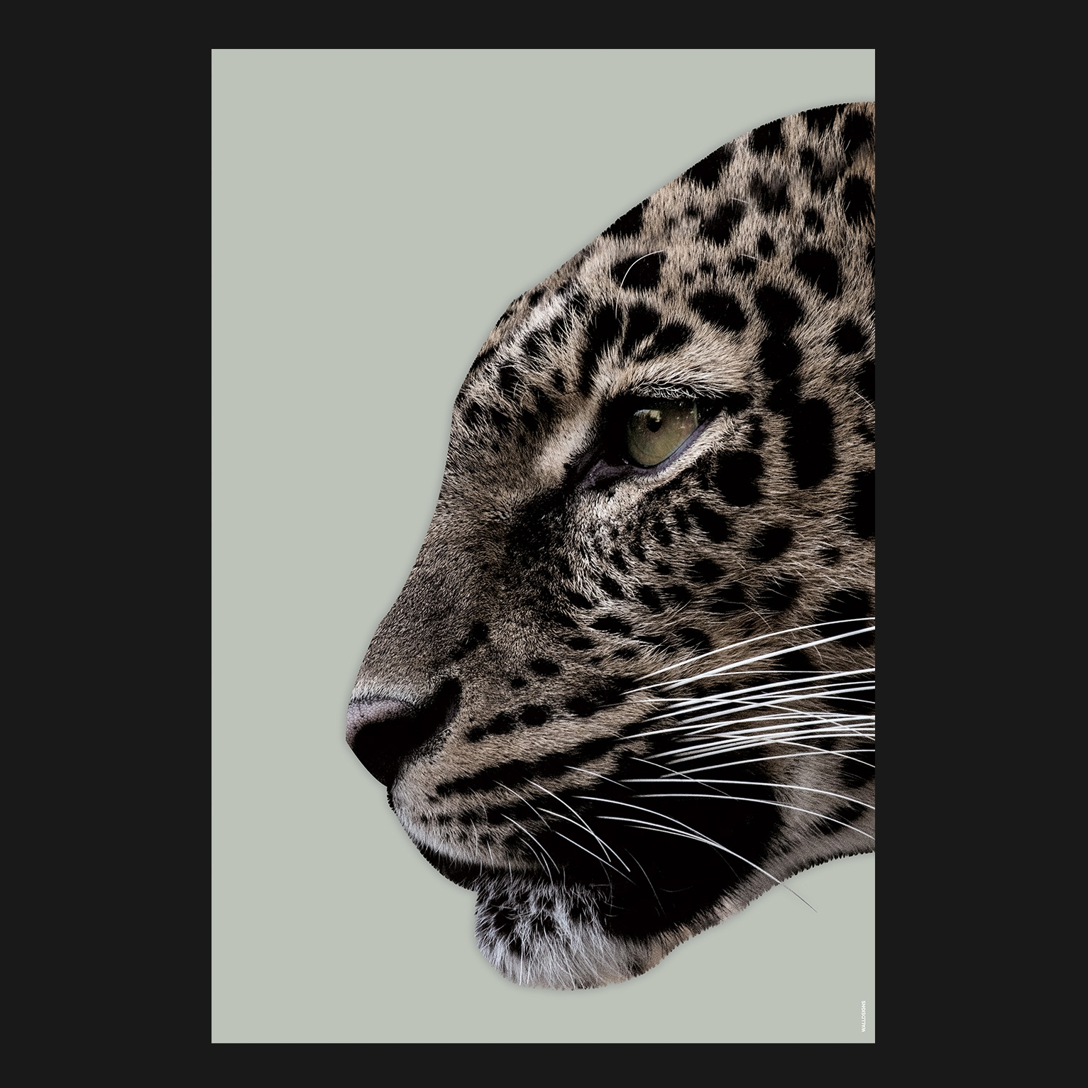 Colorful Panther   Walldsigns