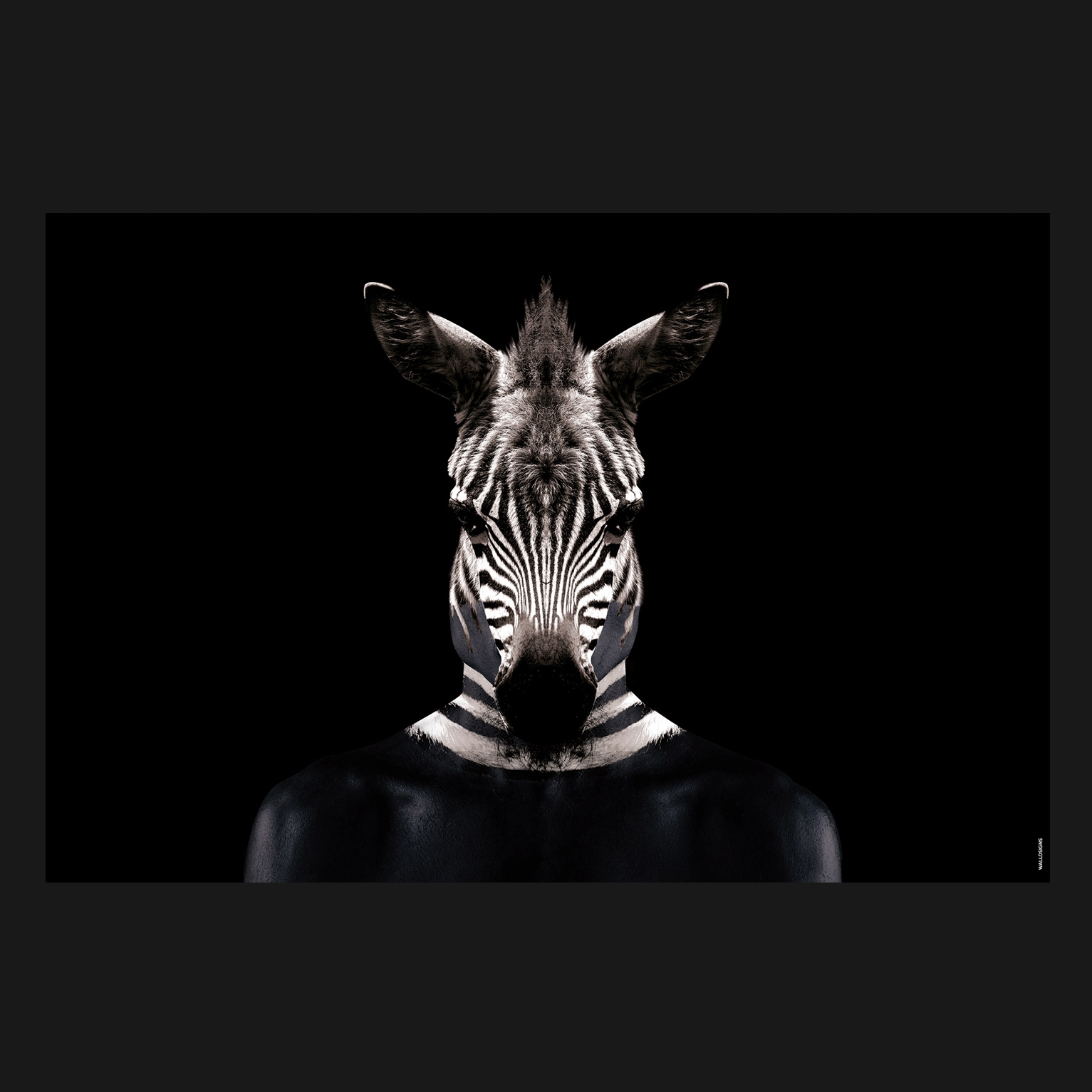 Painted Zebra   Walldsigns