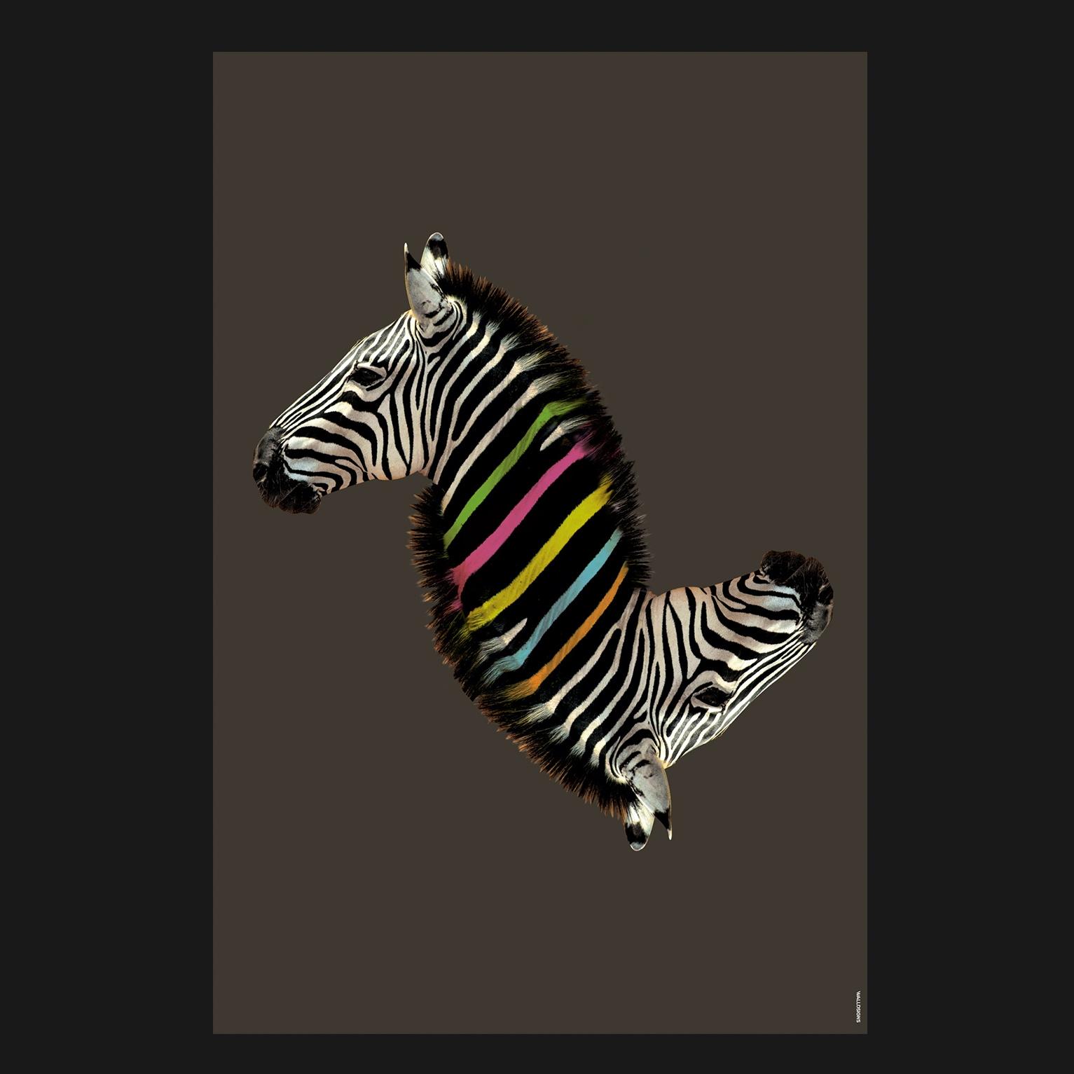 Rainbow Zebra Colorful   Walldsigns