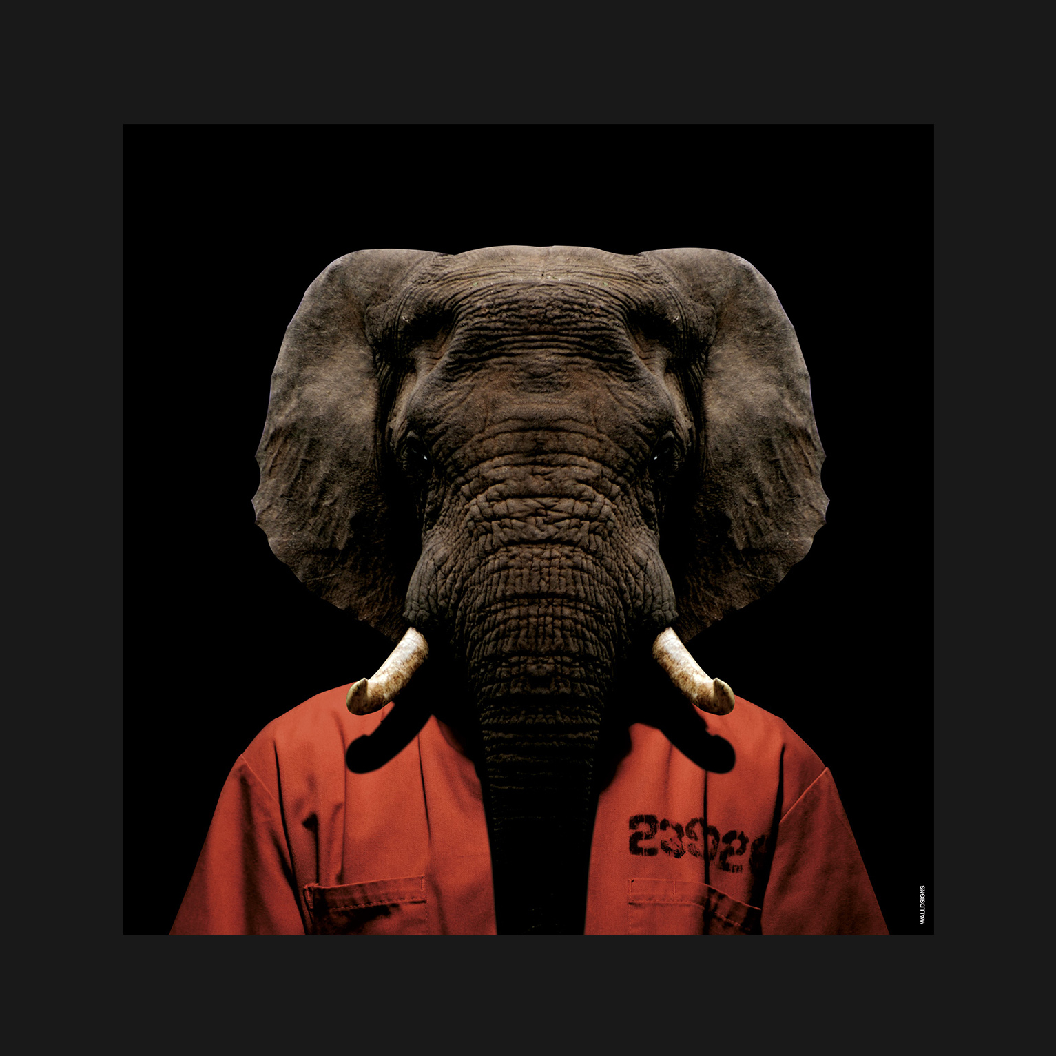 Prison Animal Elephant   Walldsigns