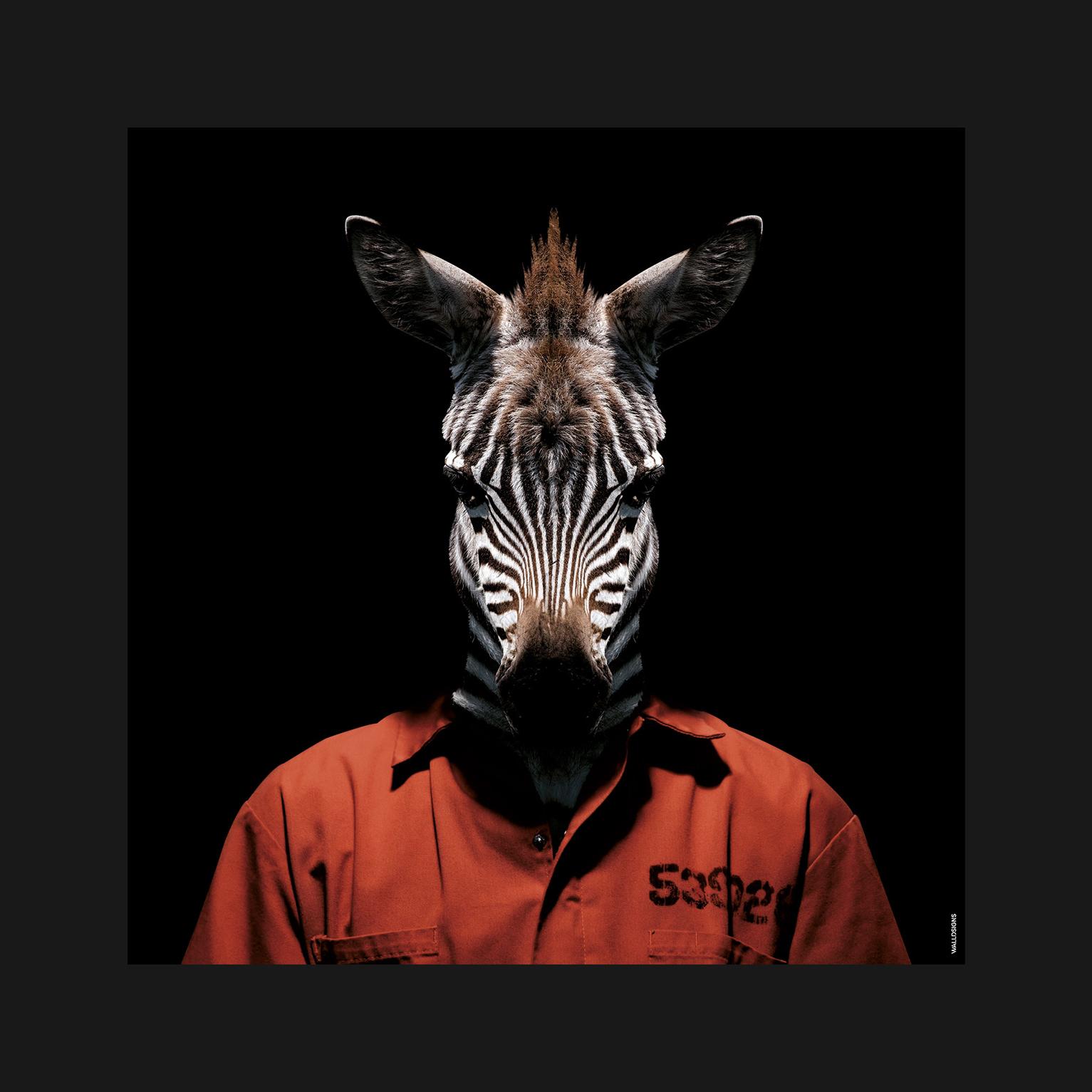 Prison Animal Zebra   Walldsigns
