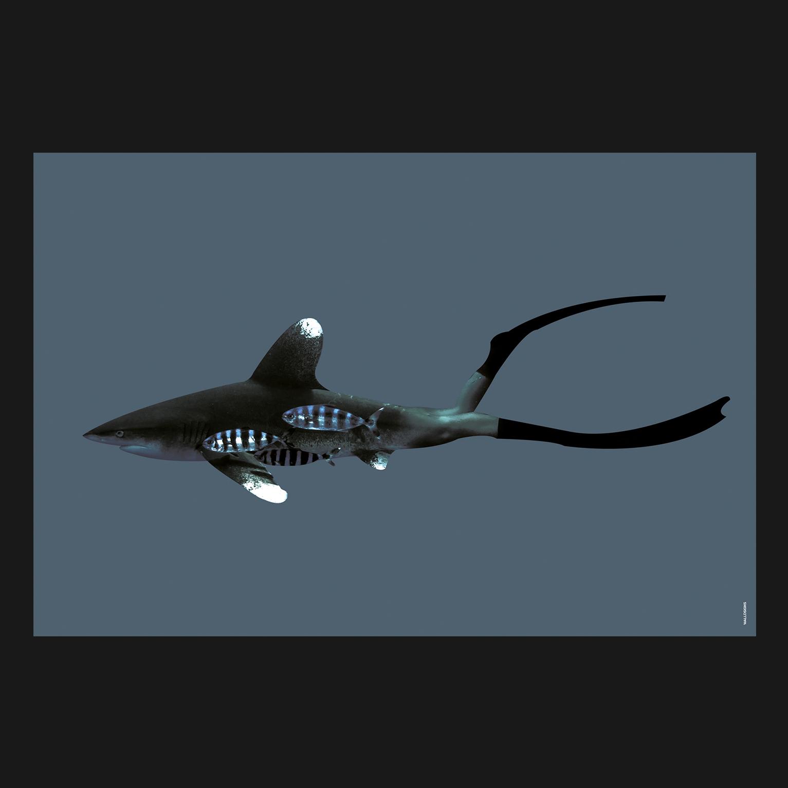 Shark Men Colorful   Walldsigns